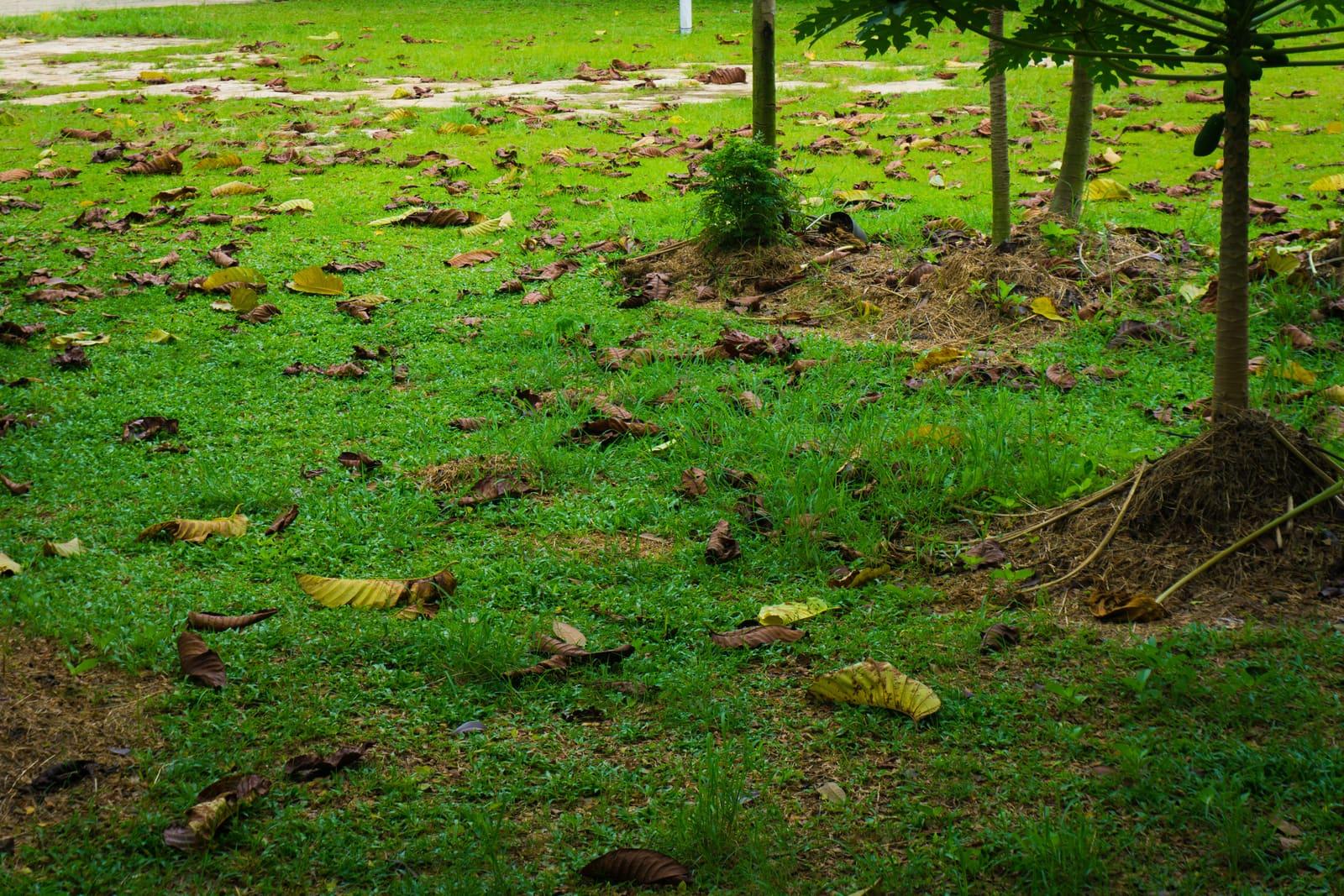 Nettoyage - Nid'Dom en fini avec les mauvaises herbes